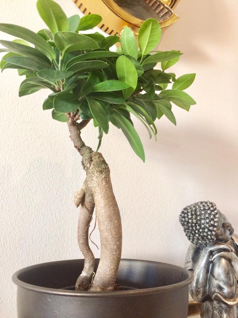 Växter ger god Feng shui
